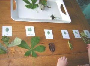 attività montessoriane 6-9 anni autunno