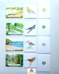 cofanetto montessori degli uccelli ippocampo