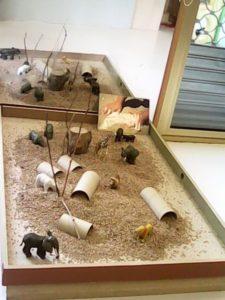 Giochi con gli animali